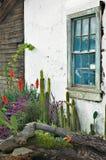 仙人掌庭院视窗 免版税库存图片