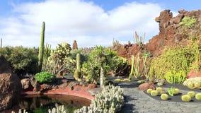 仙人掌庭院,jardin de cactus看法在Guatiza,兰萨罗特岛,加那利群岛,西班牙,4k英尺长度录影 股票录像
