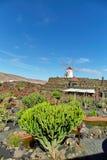 仙人掌庭院Jardin de Cactus在兰萨罗特岛海岛 库存图片