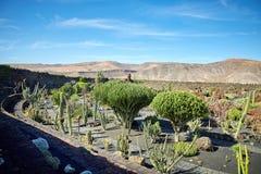 仙人掌庭院Jardin de Cactus在兰萨罗特岛海岛 免版税库存图片