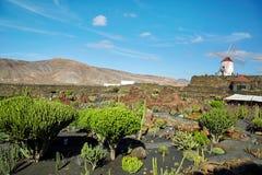 仙人掌庭院Jardin de Cactus在兰萨罗特岛海岛 图库摄影