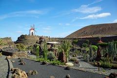 仙人掌庭院Jardin de Cactus在兰萨罗特岛海岛 免版税库存照片