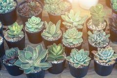 仙人掌或多汁植物在塑料罐在树市场上装饰和风景想法构思设计的 库存图片