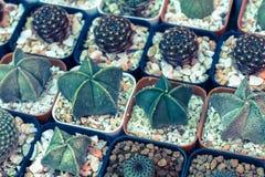 仙人掌或多汁植物在塑料罐在树市场上装饰和风景想法构思设计的 库存照片