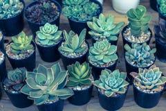 仙人掌或多汁植物在塑料罐在树市场上装饰和风景想法构思设计的 免版税库存照片