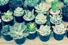 仙人掌或多汁植物在塑料罐在树市场上装饰的 库存图片