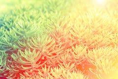 仙人掌或多汁植物在树市场上装饰的设计 免版税图库摄影