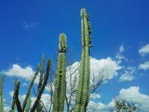 仙人掌有与云彩的天空背景 免版税库存照片
