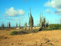 仙人掌沙漠 图库摄影