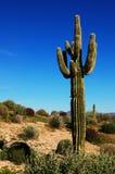 仙人掌沙漠 库存照片