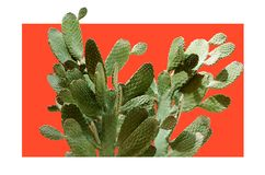 仙人掌浅深源的仙人掌 创造性的布局 最小的样式静物画 免版税图库摄影