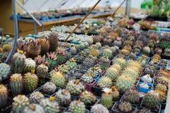 仙人掌的家庭菜园汇集 免版税库存照片