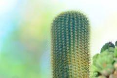 仙人掌花卉生长在庭院里 库存照片