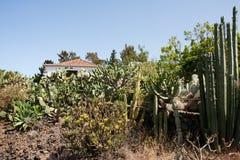 仙人掌黄雀色庭院海岛la palma 库存图片