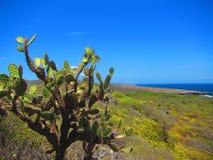 仙人掌,博内尔岛荷兰antillies 图库摄影