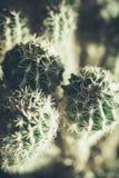 仙人掌,照片的自然关闭 免版税图库摄影