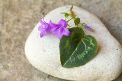 仙客来叶子形状喜欢在一块白色石头的心脏 免版税库存图片
