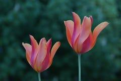 代表自然的秀丽的美丽的小花 自然是壮观的 正面图 免版税图库摄影