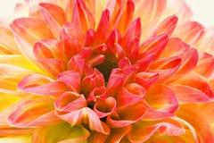 令人惊讶的在顶面优质印刷品的花在开花背景中和墙纸 免版税图库摄影