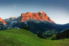 令人惊讶的瑞士高山山风景、绿色领域和高山与多雪的山峰在背景,格林德瓦,烟特勒根中 库存照片