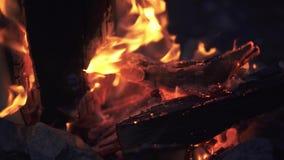 令人惊讶的篝火关闭  美妙地灼烧的木柴在晚上在森林里 影视素材