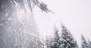 令人惊讶的细节在一个坚硬冬日以有很多雪的树震动多雪的圣诞树特写镜头分支  股票视频