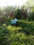 令人惊讶的绿色庭院 图库摄影