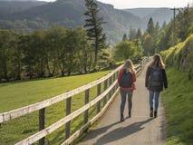 令人惊讶的绿色爱尔兰草原在威克洛山脉 库存照片
