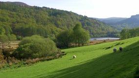 令人惊讶的绿色爱尔兰草原在威克洛山脉 股票视频