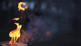 令人惊讶的长的火焰和轴在地面在此附近 令人惊讶的篝火燃烧在森林里 股票录像