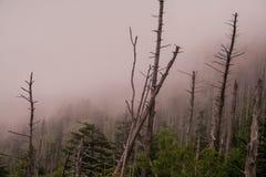 令人毛骨悚然和有雾在发烟性山 图库摄影