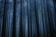 令人毛骨悚然的森林 免版税库存图片