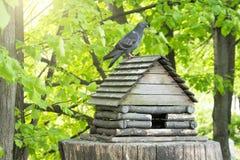 以一个小屋的形式一个鸟饲养者在大麻在有一只鸠的一个公园在屋顶 免版税库存图片