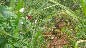 以一只美丽的蝴蝶为特色的自然 免版税库存图片