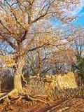 以一栋古老别墅的废墟为特色的一个考古学站点在托斯卡纳,意大利 库存图片