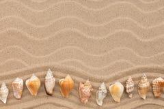 以之字形的形式海壳在沙丘说谎 免版税库存照片