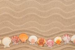 以之字形的形式海壳在沙丘说谎 免版税库存图片
