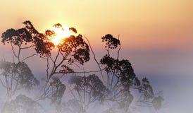 以冬天日落为背景的干草 晴朗的桃红色蓝色冬天背景 特写镜头 免版税库存照片