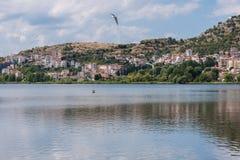 以卡斯托里亚和Orestias湖城市的为背景飞行天鹅 库存图片