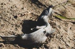 以取暖的蛇的形式蛇在阳光下 图库摄影