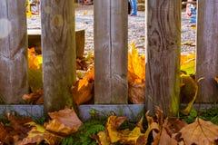 以叶子橙红黄色盖的木门操场Autum 免版税图库摄影