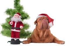 以后的圣诞老人 免版税库存图片