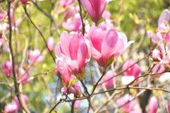 以后的春天 图库摄影