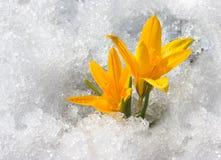 以后的春天 库存照片