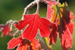 以后的秋天 库存图片