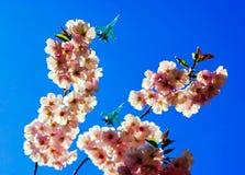 以在天空军事航空的樱花为背景 图库摄影