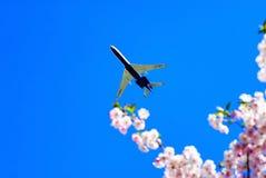 以在天空军用飞机的樱花为背景 免版税库存图片