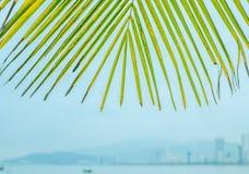 以城市为背景的棕榈叶 免版税库存照片