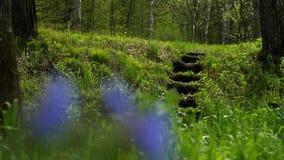 以夏天绿色森林为背景的蓝色花 影视素材