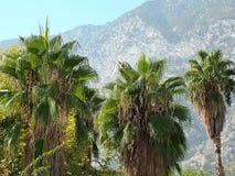 以山为背景的三棵棕榈树 免版税库存图片